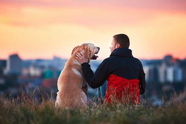 CBD oil for pet health man with dog