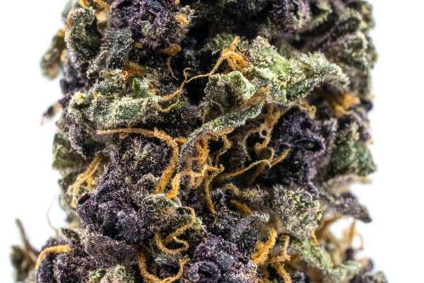 purple urkle flower closeup