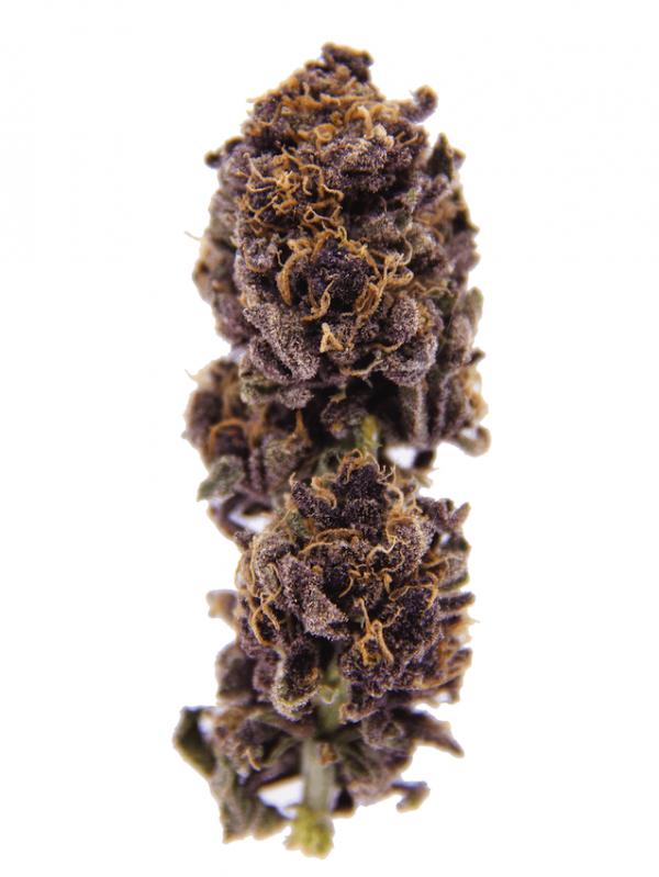 purple urkle indoor flower
